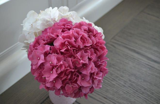 pink hydrangea in vase