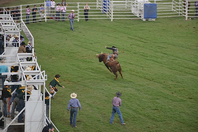 easter-show-bull-riding